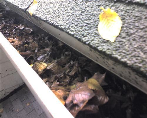 Don't wait until your gutters to have plants growing out of them.